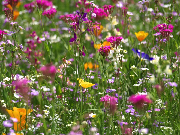 campo di fiori a primavera-parco sicurtà