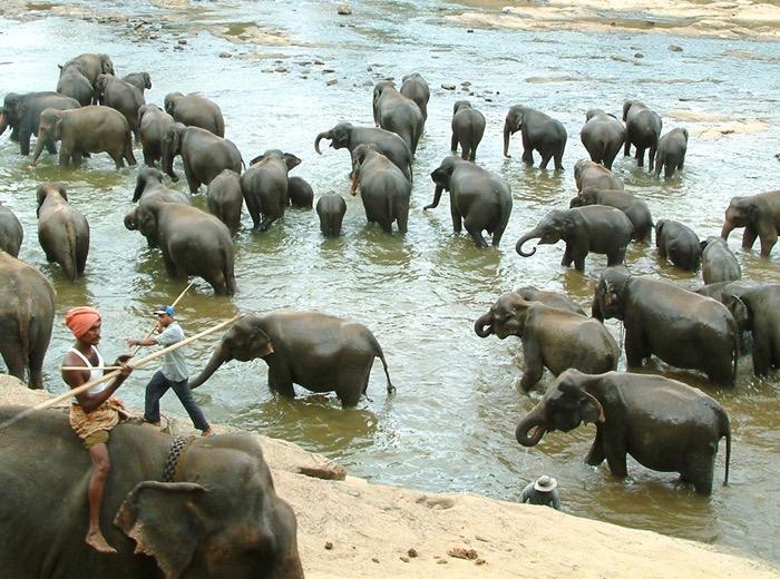 kegalle pinnewala elephant orphanage