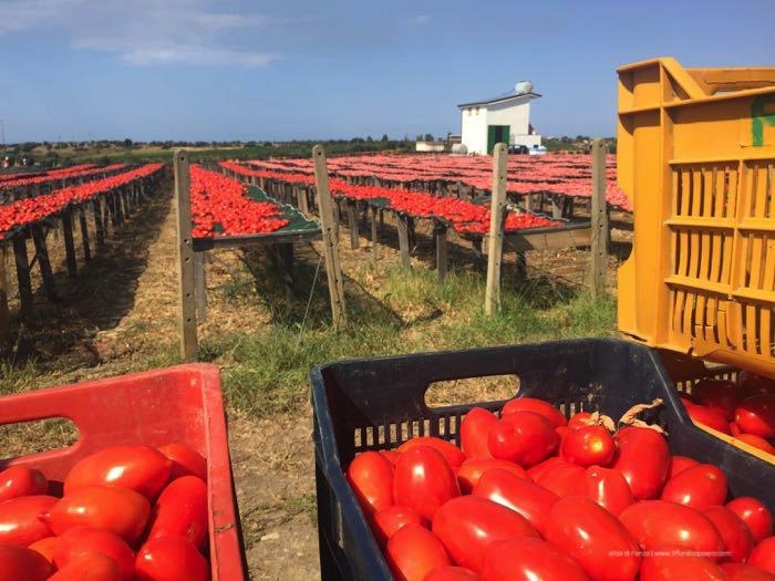 pomodori-da-essiccare
