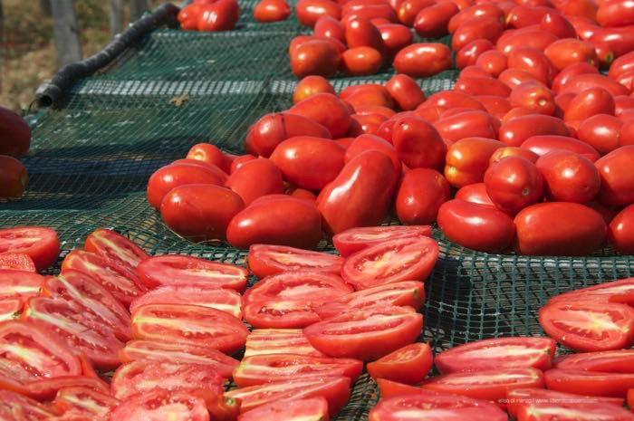pomodori-al-sole