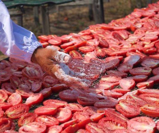 salatura pomodori