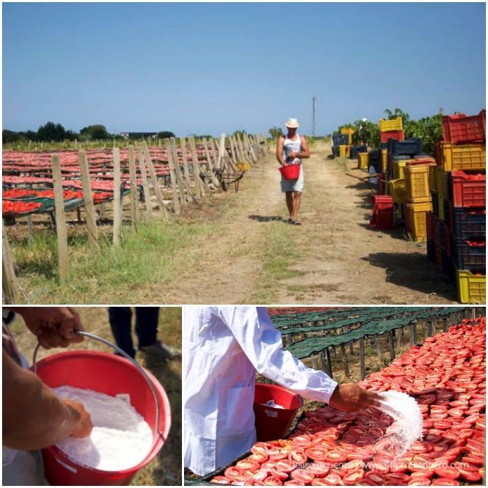 salatura-pomodori
