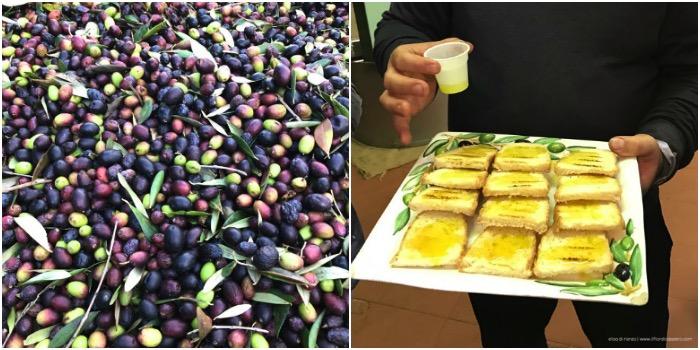 L'olio extravergine di oliva non ha segreti
