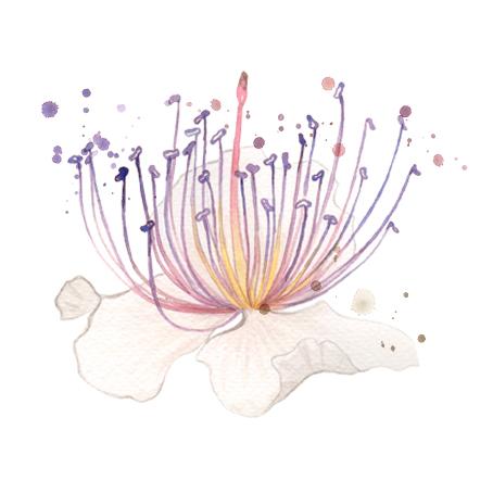 solo fiore -logo