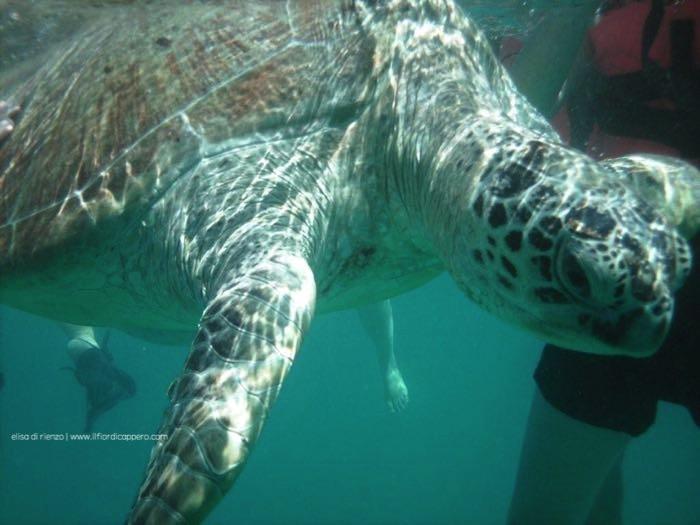 tartarughe marine-malesia