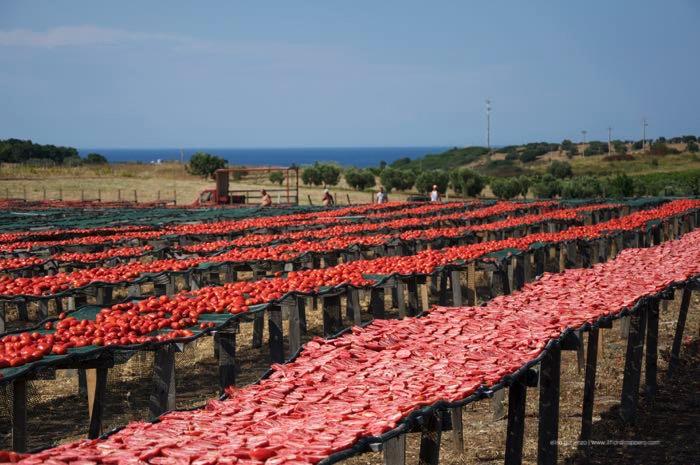 pomodori-secchi-di-calabria