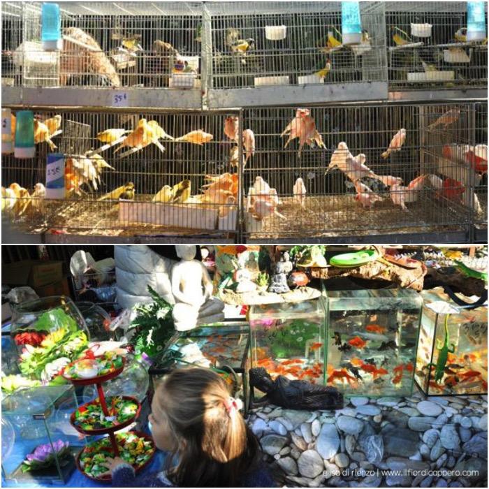 mercato fiori e uccelli
