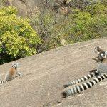 Vacanza in Madagascar