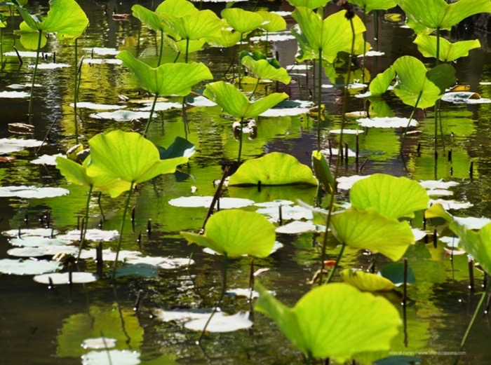 Pamplemousses, il giardino botanico