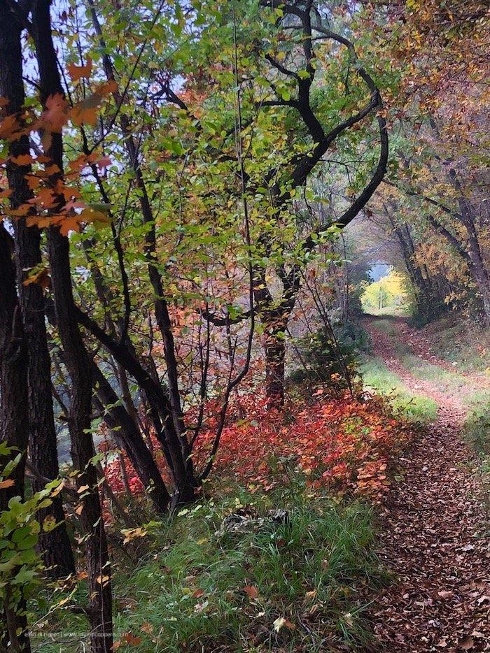 sentiero 81 Colli Berici